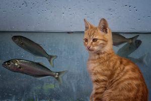 fisherman's cat