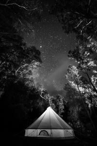 Campfire Lights