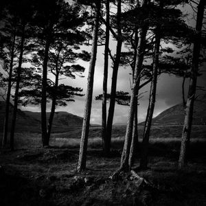 Ansel trees