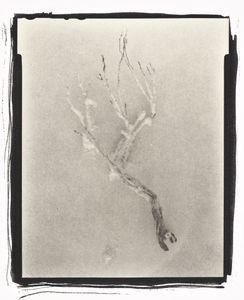 Botanical Specimen with Salt (Branch No.  2) © Claire A. Warden