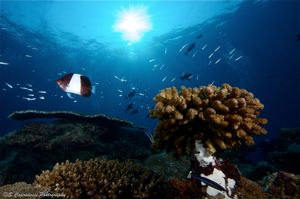 Sunshine on the Reef