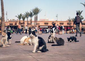 Cats of Kesh