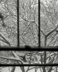 Winter Branches © Allison Barnes