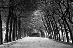Alone - Amongst trees