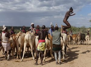 Bull-Jump Ceremony:                              ... bends to the finish ...