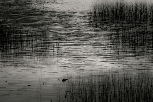 Upper Hadlock Pond 27, © Alan Henriksen
