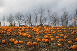 Fall Harvest, Pennsylvania