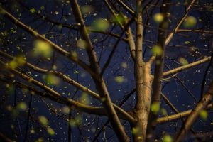 Night Trees of New York: Universe