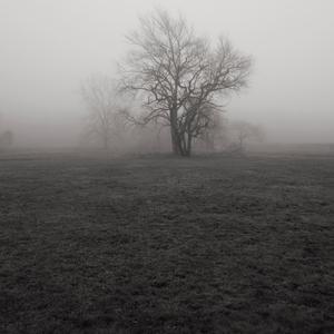 Morning Fog, New Canaan, 12 12 20