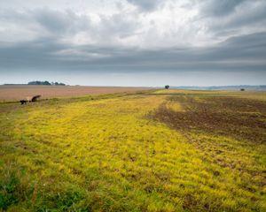 Desert #4  Herbicide use  © Steve Meyler