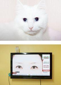 Cat Eyes © Maroesjka Lavigne