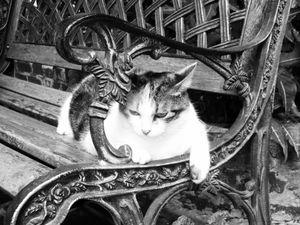 Cat on a bank - Hemingway's House
