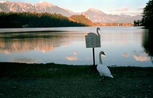 Swan Lake, 2007