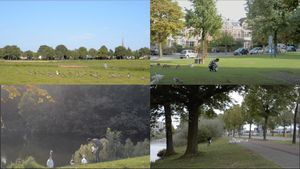 Downy feather collecting from July-September, 2017. In Breda area, the Netherlands. (video stills)