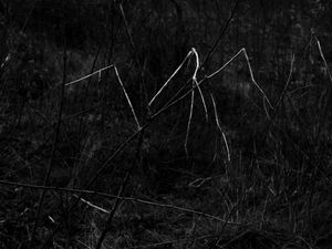 constellations-invasives-10.jpg