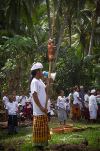 Pig Roast Offering. Bali, Indonesia