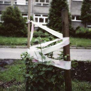 From the series Soul Garden