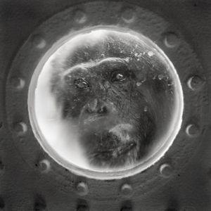 Porthole © Anne Berry