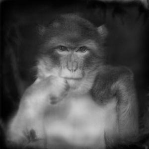 Czech Monkey © Anne Berry
