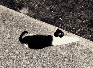 Stray Cat 15