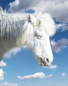 Pony's dream