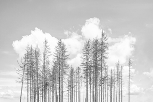 The Dying Forest #05