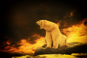 Polarbear Fight