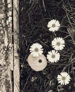 Mushroom and Flowers 1