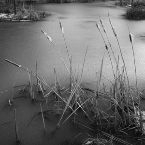 The Pond Project #6