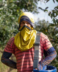 immigrants in the avocado farms