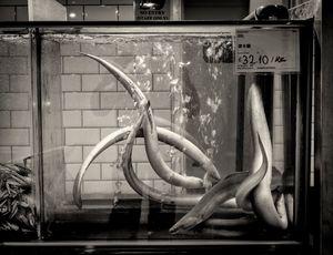 eels anyone?