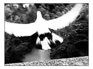 Shy soul - fly again