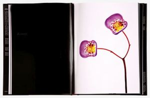 "Spread 32, ""Teacup Flower (Jovellana violacea)""  from the book, joSon Intimate Portraits of Nature"