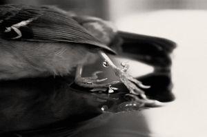 The Lost Bird_III