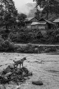 Dog and River