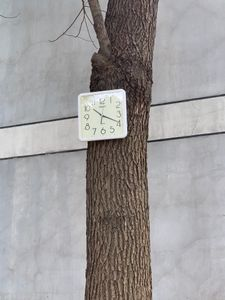 Clock walking on the tree