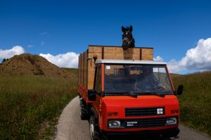 Trasporto cavalli