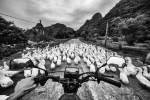 On the Road with some ducks