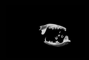 Michał Korta, Untitled (#0003017) from theThe Shadow Line series