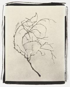 Botanical Specimen with Salt (Branch No. 3)© Claire A. Warden