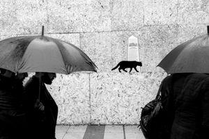 stray cat-1