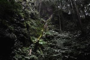 The Japanese Forest