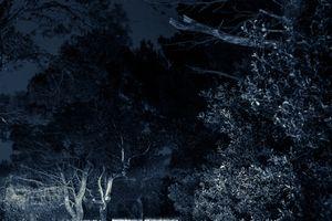 Midnight./ IV.