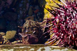 Sea Slug, Abalone Cove