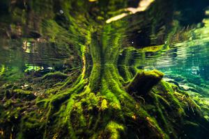 Roots at Cenote Jardines del Eden
