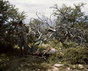 untitled novice hunter, cell phone and blesbok, eastern cape, south africa-from the series 'hunters'-David Chancellor