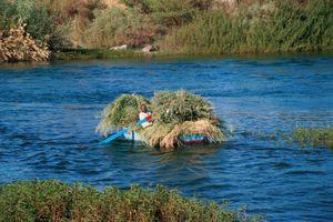 Life along the Nile 010