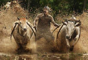 The Pacujawi © Alamsyah Rauf, Indonesia