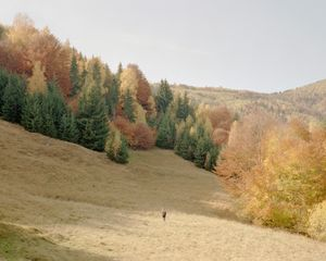 Razvan collecting samples above Rausorul in the Rucar Hunting Area. [October, 2018]