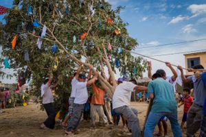Es el día del cortamonte, el árbol que será arrancado de la tierra, adornado con regalos y vuelto a sembrar para ser cortado a machetazos en una fiesta.